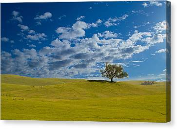 Perfect Landscape Canvas Print by Rima Biswas