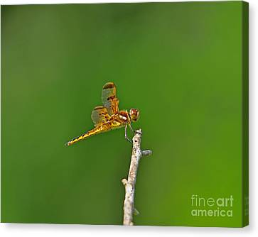 Perfect Painted Canvas Print by Al Powell Photography USA