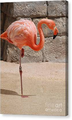 Perfect Pink Flamingo Canvas Print by DejaVu Designs