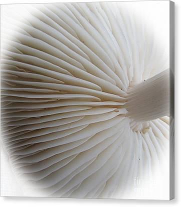 Perfect Round White Mushroom Canvas Print by Tina M Wenger