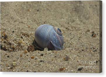 Perfect Shell Canvas Print by Amazing Jules