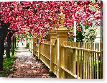 Perfect Time For A Spring Walk Canvas Print