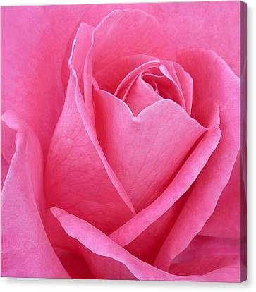 Canvas Print featuring the photograph Perfection by Kim Andelkovic