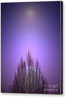 Canvas Print featuring the photograph Perfectly Purple by Chris Anderson