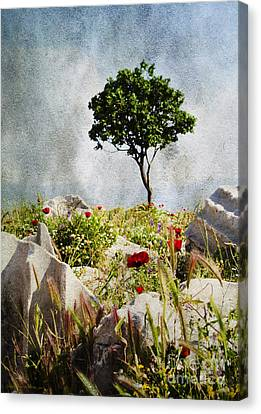 Pergamum's Tree Canvas Print