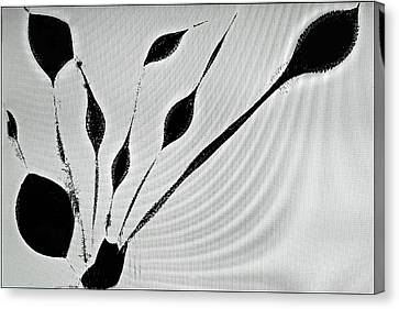 Canvas Print featuring the photograph Perhaps A Plant by Geraldine Alexander