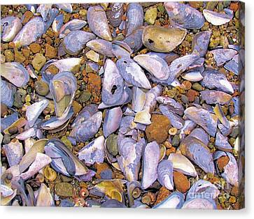 Periwinkles Muscles And Clams Canvas Print