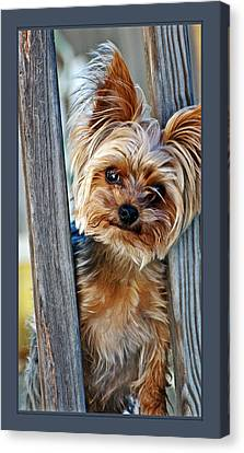 Perky Pup Canvas Print by Donna Proctor