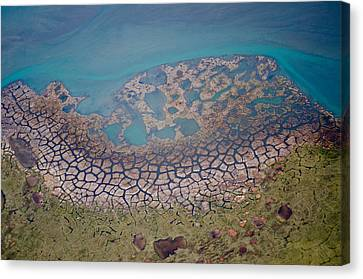 Permafrost Polygons On The Coast Canvas Print by Roger Clifford