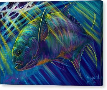 Fish Tanks Canvas Print - Permit To Greatness  by Yusniel Santos