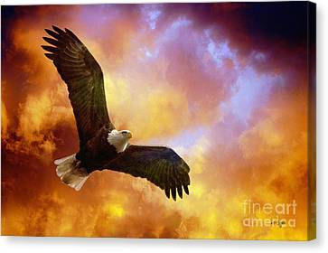 Eagle Canvas Print - Perseverance by Lois Bryan