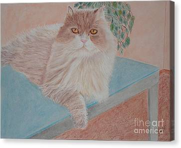 Persian Cat Canvas Print by Cybele Chaves