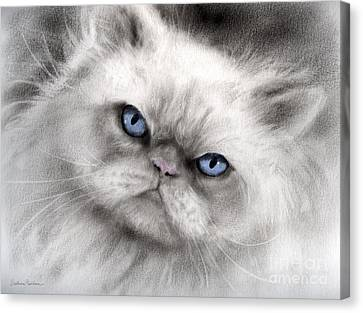 Persian Cat With Blue Eyes Canvas Print by Svetlana Novikova