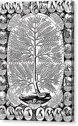 Peruvian Bark Or Jesuit Tree Canvas Print