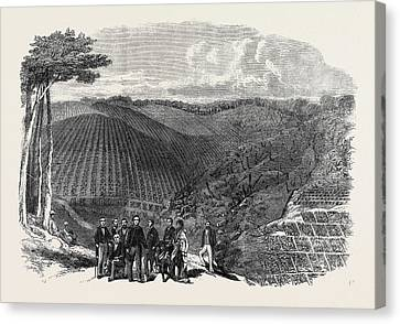 Plantations Canvas Print - Peruvian Bark Tree Plantations In The Neilgherry Hills by Indian School