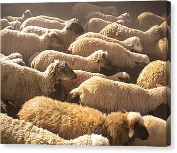 Peruvian Wool Parade Canvas Print