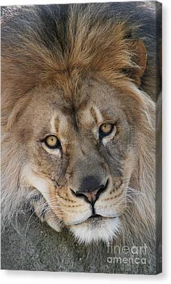 Pet Me Canvas Print by Judy Whitton