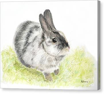 Pet Rabbit Gray Pastel Canvas Print
