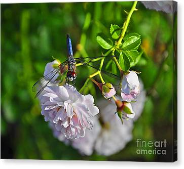 Petal Perch Canvas Print
