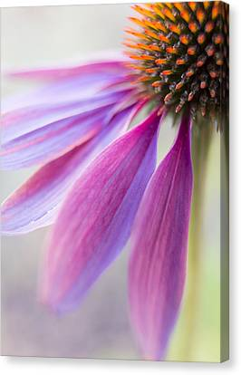 Unique View Canvas Print - Petal Pink by Caitlyn  Grasso