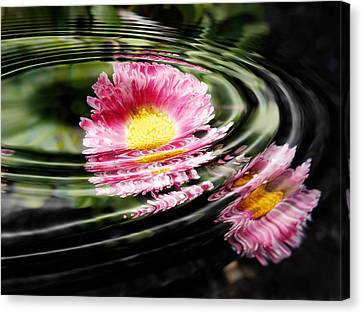 Petal Ripple Canvas Print by Zinvolle Art
