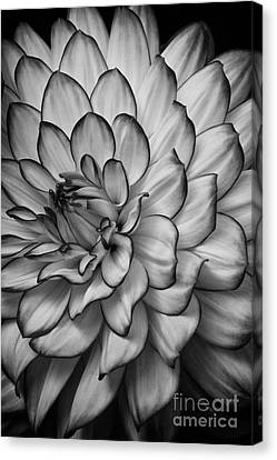Petals Canvas Print by Carrie Cranwill