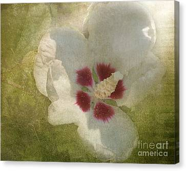 Canvas Print featuring the photograph Petals In Shadows by Kathi Mirto