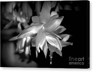 Petals Of Silver Canvas Print