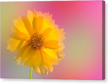 Petals Of Sunshine Canvas Print by Fred Larson