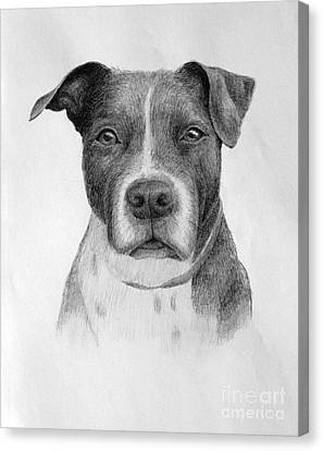 Canvas Print featuring the drawing Petey by Denise M Cassano