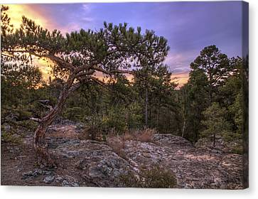 Petit Jean Mountain Bonsai Tree - Arkansas Canvas Print