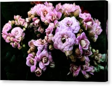 Petite And Pink Canvas Print