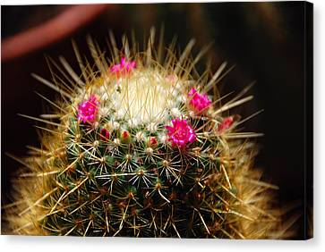 Petite Cactus Canvas Print by John Schneider
