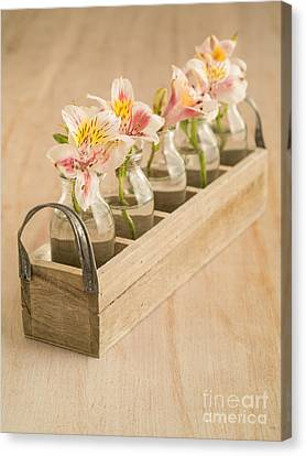 Wooden Box Canvas Print - Petites Fleurs by Edward Fielding