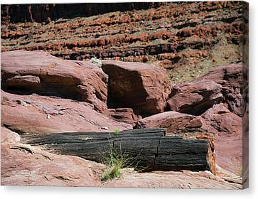 Petrified Log And Sandstone Canvas Print by Jim West