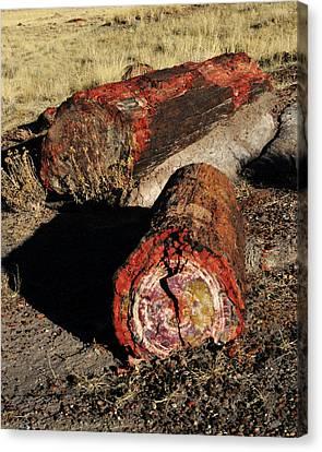 Petrified Forest Arizona Canvas Print - Petrified Logs, Petrified National by Michel Hersen