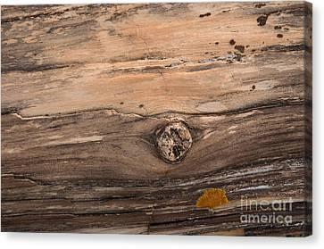 Petrified Wood Detail Canvas Print by Vivian Christopher