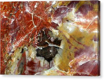 Petrified Wood Canvas Print
