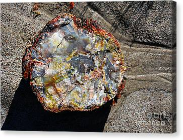 Petrified Wood Rainbow Cross Section Macro At Petrified Forest National Park Canvas Print