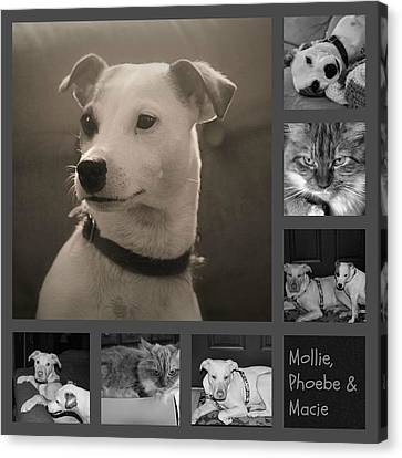 Pets Collage Canvas Print by Carolyn Ricks