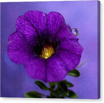 Petunia Dream Canvas Print
