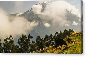 Peru Mountains With Cow Canvas Print by Allen Sheffield