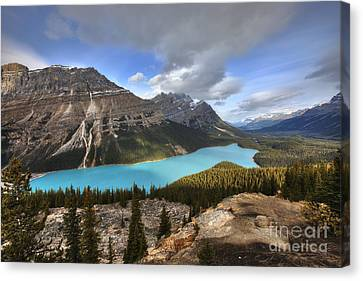 Peyto Lake Banff Canvas Print by Dan Jurak