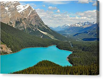 Peyto Lake Canvas Print by Lisa Phillips