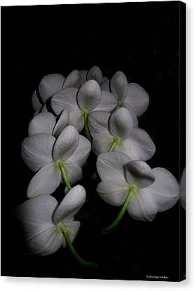 Phalaenopsis Backs Canvas Print