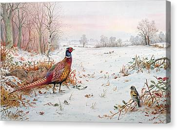 Pheasant And Bramblefinch In The Snow Canvas Print by Carl Donner