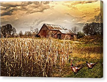 Pheasants Heading For Corn Patch Canvas Print by Randall Branham