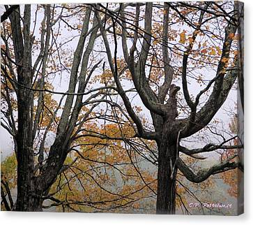 Pheonix In The Fall Canvas Print by Carolyn Postelwait