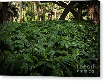 Philodendron Covering Canvas Print