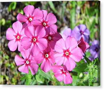 Canvas Print featuring the photograph Phlox Beside The Road by D Hackett